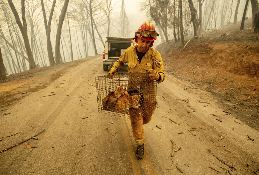 Carr Fire Group Rescues Pets | WORLDteen